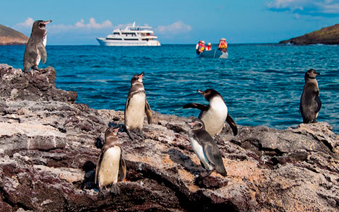 Travel to Galapagos Island in Ecuador