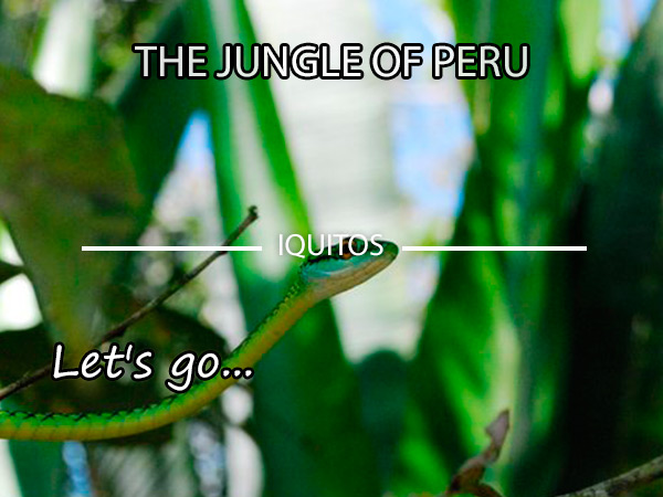 Excursion to the heart of the Peruvian Jungle - Iquitos (106 m)